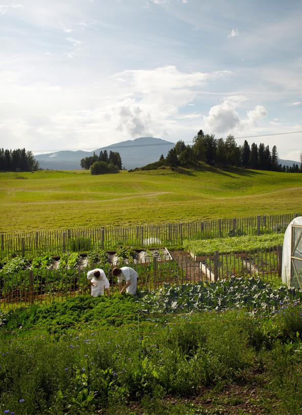 gastronomy-faviken-garden