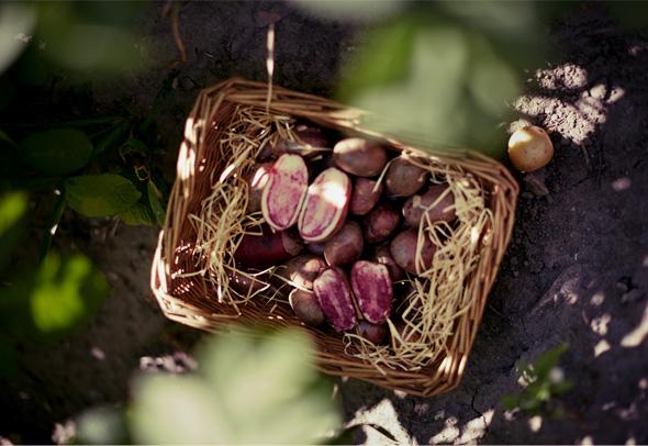 potato-potatobasket2