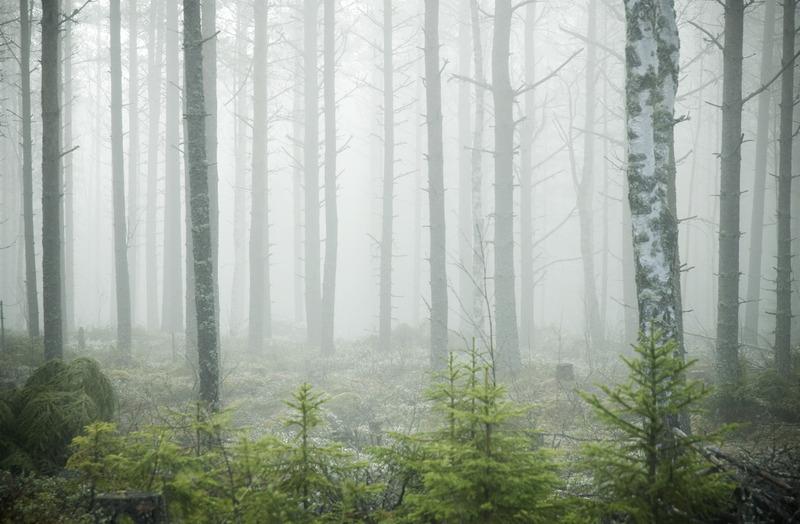 Dimmig skog, TŠfteŒ, Norrland. Photo: Sara Ingman