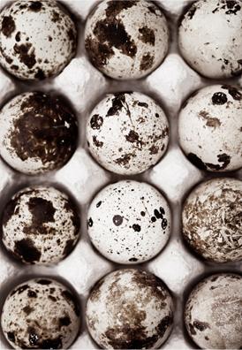 sweden-eggs
