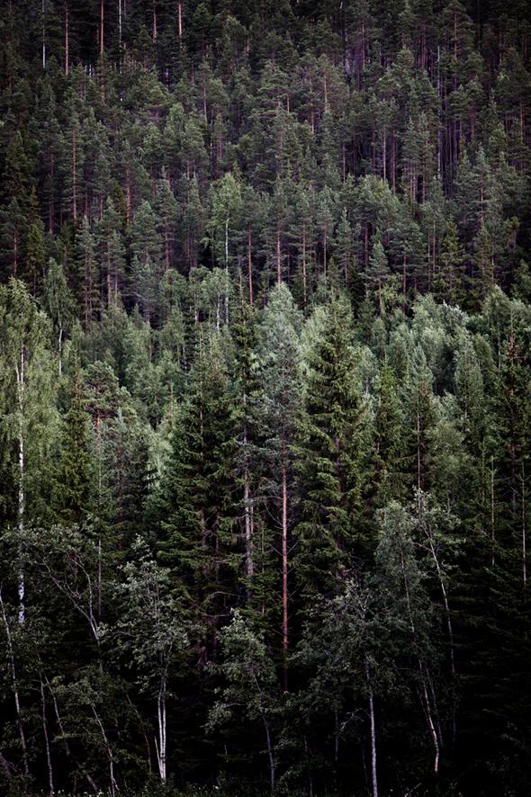 sweden-woods
